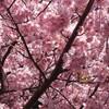 勝田東店 🌸🌸🌸お花見の季節ですね🌸🌸🌸