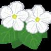 熊本出張で復帰戦 ジャグラー 花を咲かすブログ②