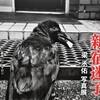銀座ニコンサロンの梁丞佑写真展「新宿迷子」を見る