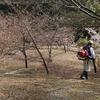 蒲郡クラシックホテルの河津桜