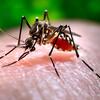 家へのヤブ蚊の侵入を防ぐ超効果的なアイテムを見つけた!