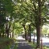 8月の並木道