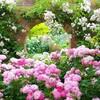 『東武トレジャーガーデン・春のローズガーデンまつり』~英国風の建物×バラの非現実的空間~