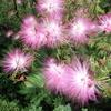7月15日誕生日の花と花言葉歌句