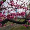 春分の日。