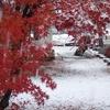 2016年11月25日(金)初雪で初氷点下