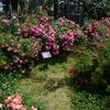 パルメンガルテンフランクフルト 京成バラ園2014春 5/31