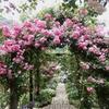 ミモザ・ガーデンの日記ー熱海から来た花