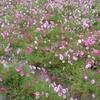 一息入れる日・・・コスモス園、湯の花温泉
