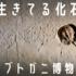 生きている化石!世界で唯一のカブトガニ博物館in岡山。恐竜もいます。