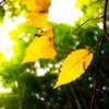 冬の光と秋の枯葉 二つの音の静けさに