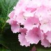 済州島(チェジュ島)6月の祭り情報 #アジサイ  #ホタル  #森林浴  #コンサート