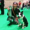 """SAMURAI DOG"" The Road to Crufts 2019 #9"