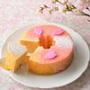 西洋菓子倶楽部 さくら咲くバウムクーヘン