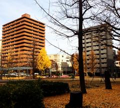 ★公園の木