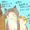 我が家のネコ三兄弟