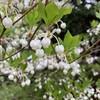 北軽井沢は今、春でした!