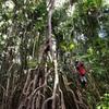 世界一周152日目 ペルー(49) 〜ジャングルでリアルターザンごっこ(アマゾン川ジャングル3日目)〜