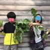 新鮮野菜の収穫と大好きな人に感謝