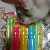 シャボン玉と遊ぶ猫たち