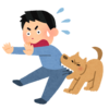 【なぜ犬は、噛むのか?】犬がかじったり噛んだりする原因やその対処法について