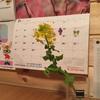 植物オタクの息子が待ちに待った春が近づいてきました-そんな春の到来を私が素直に喜べない理由