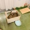 ウサギのちまき新年のごあいさつ