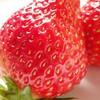 誰もが唸る美味しさ「苺のジューシーなコンポートタルト」のご紹介