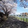 盛岡の桜 2019