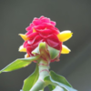 相模原公園の自粛応援! 温室の旬の花をHPで紹介!