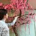 梅のすごい盆栽見てきたよ  長浜盆梅展