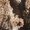 飛行機×桜の名所!!成田さくらの山へお花見☆