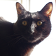 今日の黒猫モモ&白黒猫ナナの動画ー708