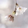 2011年春・京都探訪(4)まとめ1。