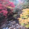 第二回黒尊渓谷紅葉狩り