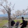 桜は満開だけれど