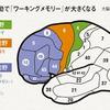 運動前野ってなんだ→解説しますよ(๑╹ω╹๑ )