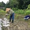 自然農のお米作り2年目の妄想