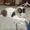 初 子猫下痢