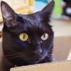 今日の黒猫モモ&白黒猫ナナの動画ー869