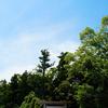 毎日一枚。「やっぱり。」おすすめ:☆☆☆☆☆ ~写真で届ける伊勢志摩観光~