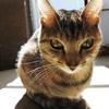 ハードボイルドな仔猫さん