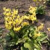 4月30日(木)コロナは収束せず月末になってしまった、会津は観光立国だがコロナは寄り付かない。「愛の花園」へ行って来た