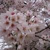 【北関東】春の花まつり ~花の写真だよ~