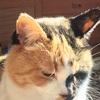 猫カフェ(かんきちの夏休み2)