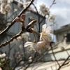 合宿最終日/春はすぐそこ