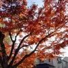 秋から冬へ♪