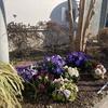 サイコー花壇のようす