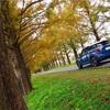 メタセコイア並木で紅葉ドライブ!!周辺のオシャレなカフェ、映えスポット紹介☕️