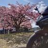 春は見つけられましたか? (小声)
